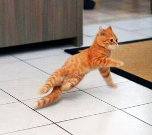 cat-breakdance