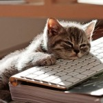 cat-sleeping-on-laptop